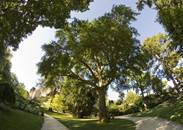 Jardin_des_plantes_Poitiers