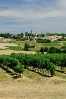 Vignoble à Cahuzac