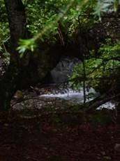 Arboretum Joueou
