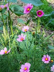 Balade botanique - Découverte des plantes sauvages