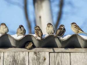 Logements et nids, évolution d'une cohabitation