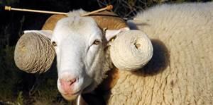 Exposition : Suivez le fil…De la brebis Raïole au gilet de berger !