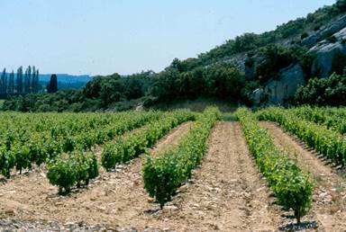 Domaine Castan - Mas Chantecler
