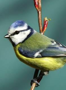 Sortie découverte des oiseaux