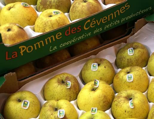 pommes reinettes