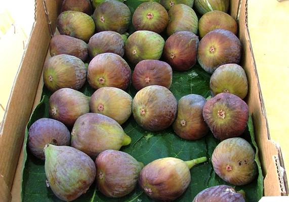 Figues