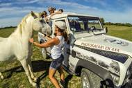 Safari Camargue Sauvage