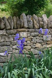Au pays des pierres qui poussent après la pluie