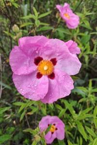 Fête de la Nature - La beauté des plantes