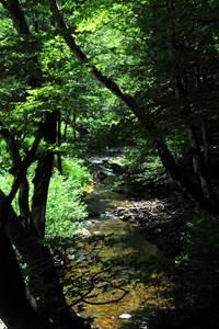 Forêt Domaniale de Valbonne