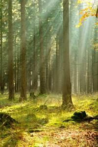 Forêt ancienne de la Valbonne et biodiversité nocturne