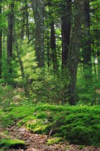 Le Monde vivant de la Forêt