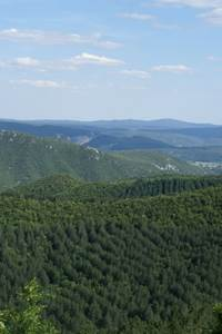 Re-Gard sur la forêt et les Camisards