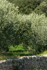 Les Olivettes du Pays de Nîmes