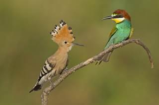 Centre Ornithologique du Gard