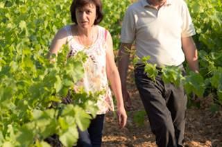 Balade Vigneronne au Domaine Valériane