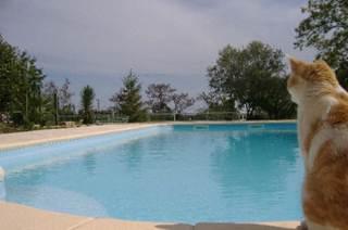 Le Tamaris, joli appartement avec poutres apparentes et piscine à partager