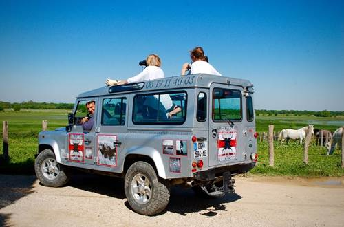 Safari Camargue Labrousse ©