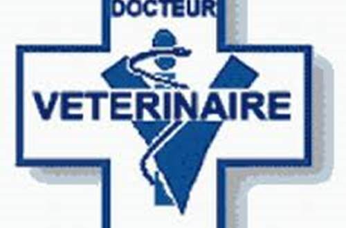 Vétérinaire ©