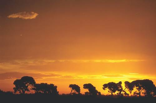 Moutons © GT
