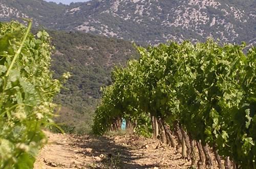 Vin des Cévennes ©