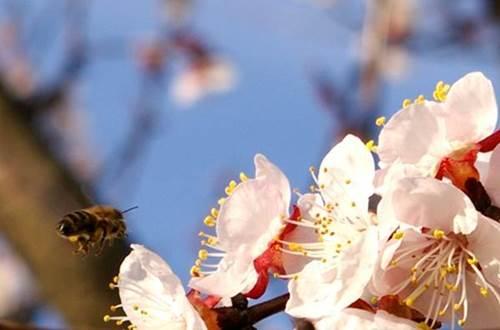 L'Ile aux abeilles ©