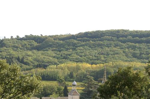 Forêt de valbonne ©