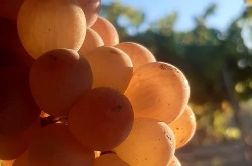 Balade intimiste à cheval  ©