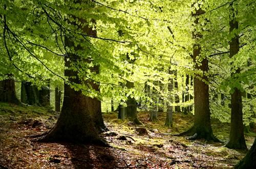 Forêt Mystèrieuse ©