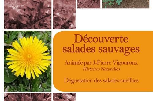 découverte des salades sauvages ©