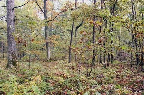 forêt ©