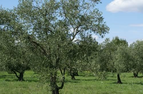 olivette-Escattes ©