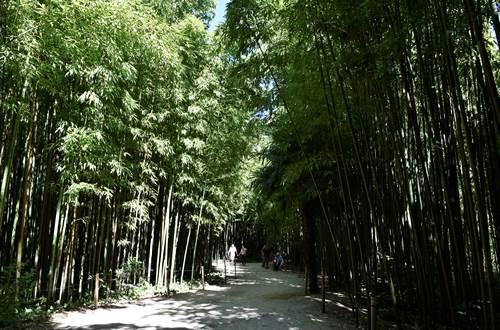Bambouseraie en Cévennes ©