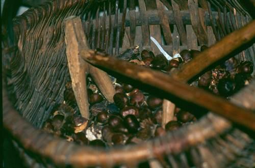 des châtaignes dans un panier ©