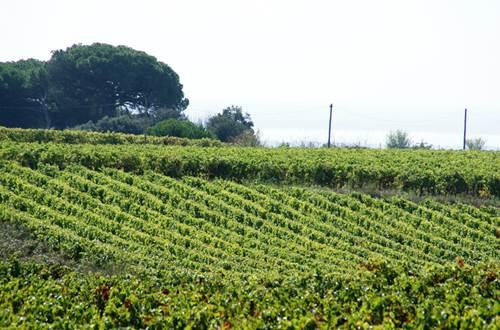 vignoble des Costières de Nîmes ©