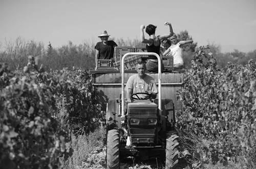 LBV tracteur dans les vignes © LBV