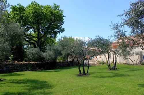 Obofix jardin avec oliviers © Yvan GREER