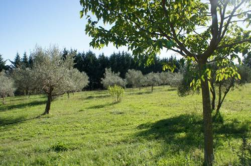 gite-l-oliveraie-st-christol-les-ales ©