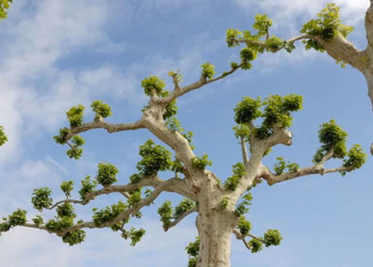 L'Agence des arbres