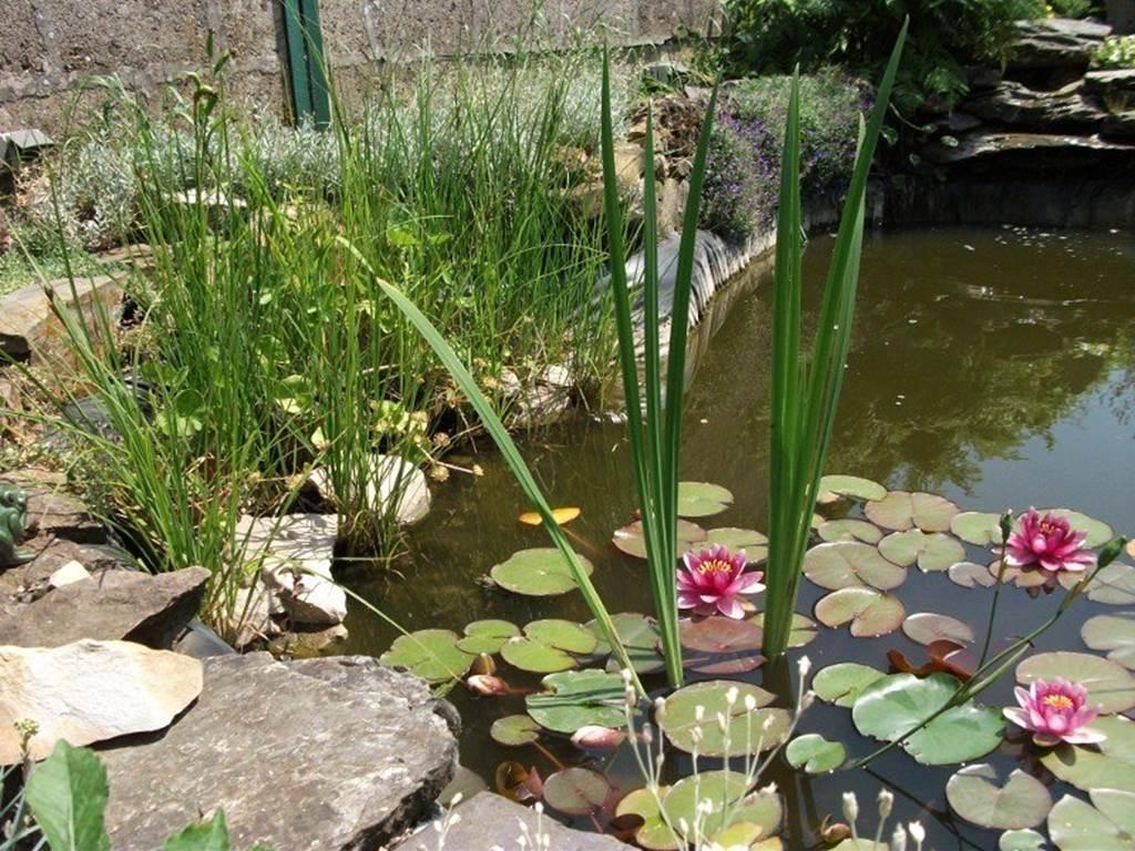 bassin du jardin